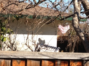 Photo of next door neighbor's yard with underwear hanging out to dry