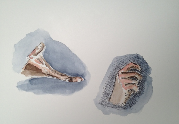 Pen & ink and watercolor wash study of a hand reaching out and a hand clenched