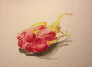 Watercolor Sketch - Single Dragonfruit