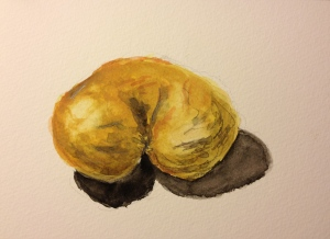 Watercolor Sketch - Wrinkled, Nearly Twin, Kiwi
