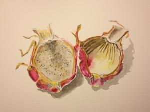 Watercolor Sketch - Aging Dragonfruit