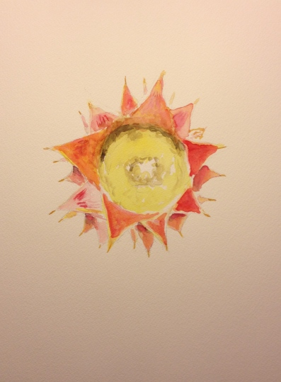 Watercolor Sketch - Bottom of a Pineapple