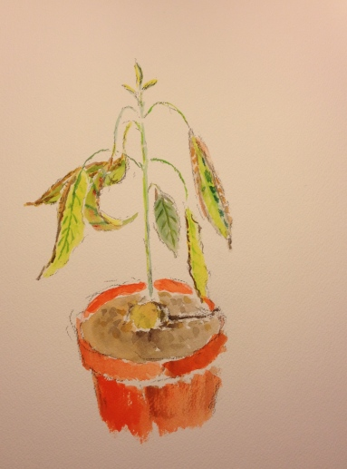 Watercolor Sketch - Arthur with Growth Spurt - Washed