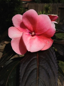 Photograph of Pink Flower