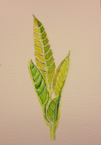 Watercolor Study - Avocado tree new growth 5