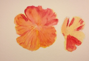 Watercolor Sketch - California Poppie - 1