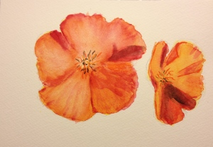 Watercolor Sketch - California Poppie - 2