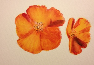 Watercolor Sketch - California Poppie - 3