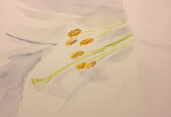 Watercolor Sketch - Easter Lily close up