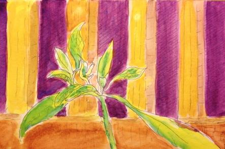 Watercolor Sketch - Multi-leaved Arthur the Avocado Tree