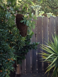 Photograph - Bees 2