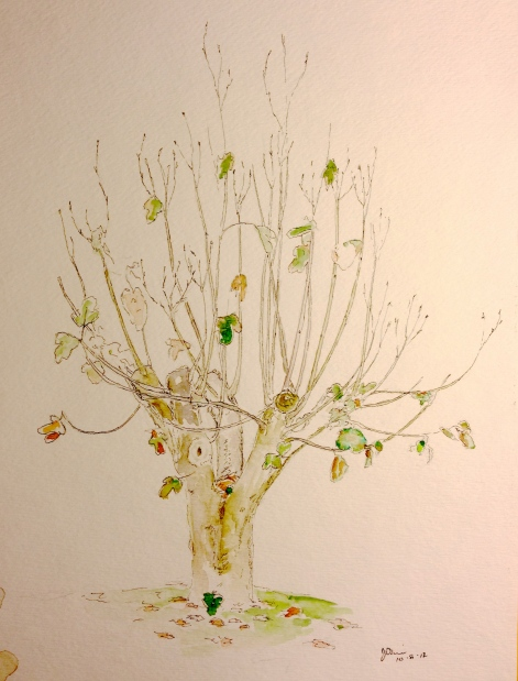 Watercolor Pen and Ink Study - Fig Tree