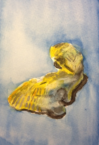Watercolor Final Sketch - My Oyster