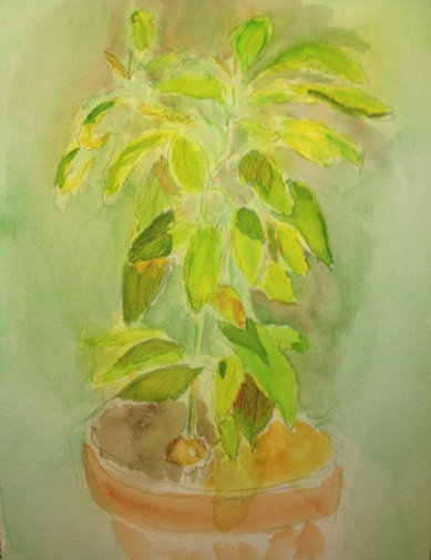 Watercolor Sketch - Avocado plant