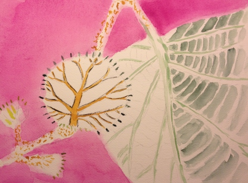 Watercolor Sketch - Baby Kiwi Leaf Stage 1 - Background and Skeleton