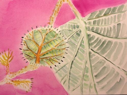 Watercolor Sketch - Baby Kiwi Leaf Stage 2 - More details