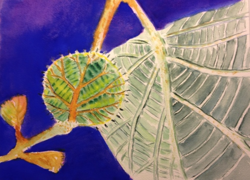 Watercolor Sketch - Baby Kiwi - Blue Background