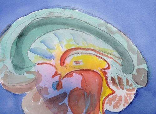 Watercolor Sketch - Brain Sagittal Section