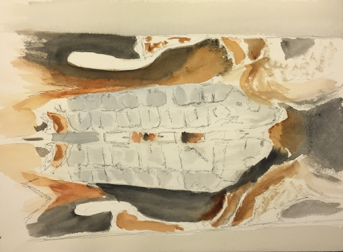 Watercolor: sketch of moth's back from photograph; mainly grays and earth tones