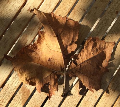 Digital Photo: Fallen Leaf 1
