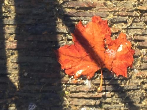 Digital Photo: Fallen Leaf in Water