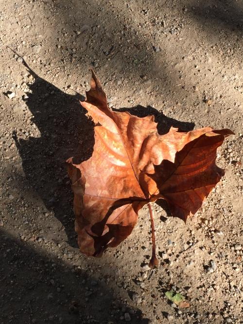 Digital Photo: Fallen Leaf in the Dust