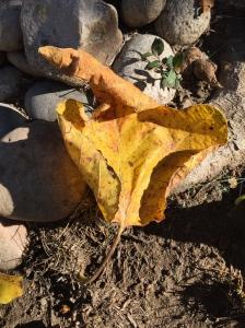 Digital Photo: Fall Fig Leaf Fallen on the Ground