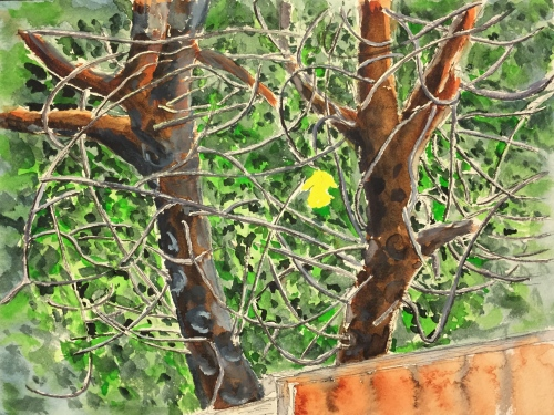 Watercolor: Last Leaf and a Tangle of Branches
