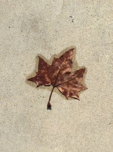 Digital Photo: Wet Leaf on the Ground