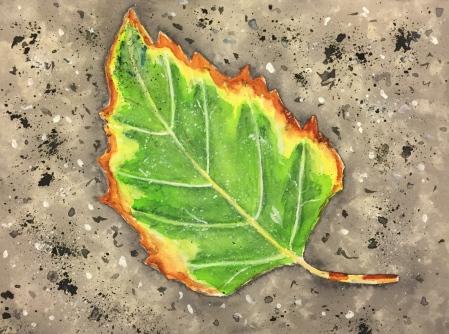 Watercolor: Leaf on the Sidewalk