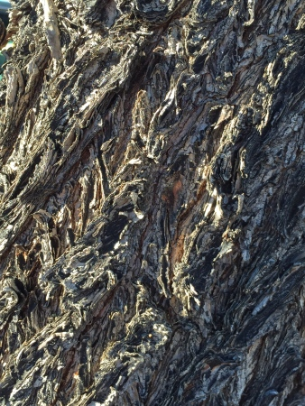 Photo: Texture of Bark
