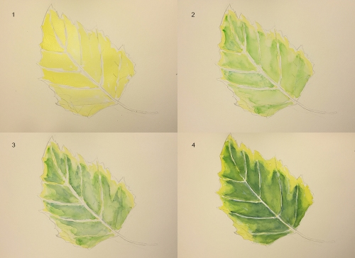 Watercolor: First 4 stages of Sidewalk Leaf