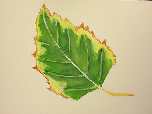 Watercolor: Penultimate stage of Sidewalk Leaf
