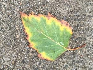 Digital Photograph: Sidewalk Leaf Reference Photo