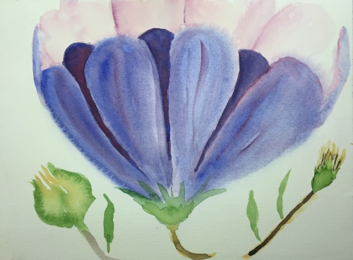 Watercolor: Flower with Purple and Pink Petals Plus a couple of Buds
