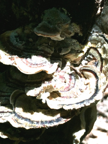 Photograph: Fungus Colony Overexposed