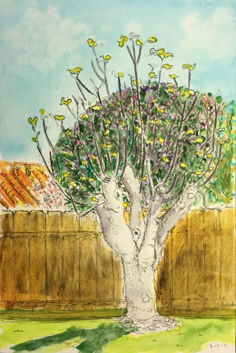 Watercolor Pen and Ink: Fig Tree with New Leaves