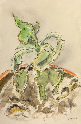 Watercolor: Pen and Ink of Dried Out Succulent
