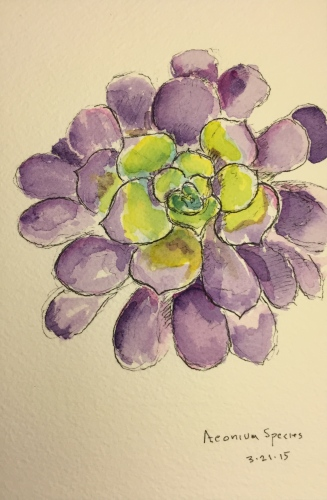 Watercolor Pen and Ink: Succulent - Aeonium