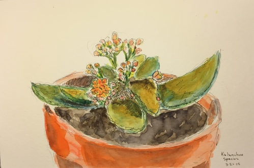 Watercolor Pen and Ink: Kalanchoe Succulent in Pot