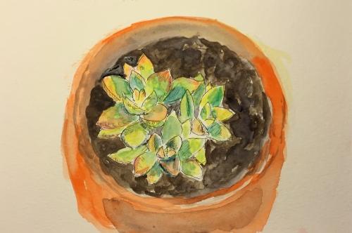 Watercolor Pen and Ink: Graptosedum Succulent