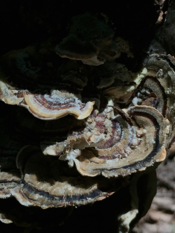 Photograph: Fungus Colony Normal Exposure