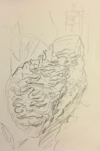 Watercolor Pen and Ink: Pencil Sketch Great Basin Fungi