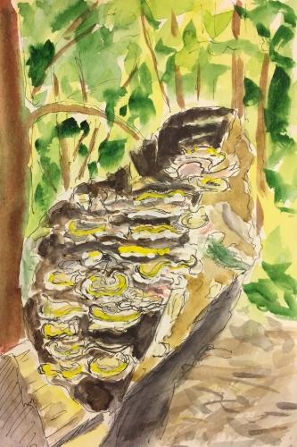 Watercolor Pen and Ink: Great Basin Fungi