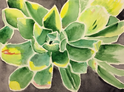 Watercolor: Unknown Succulent Top View - Final