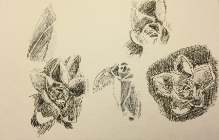 Pen and Ink: Succulent Leaves Exercise