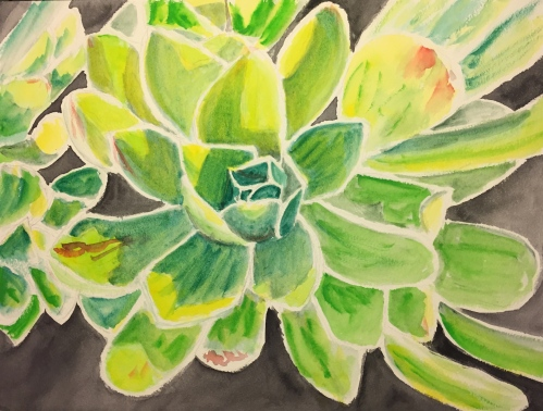 Watercolor: Larger Format Portrayal of Unknown Succulent