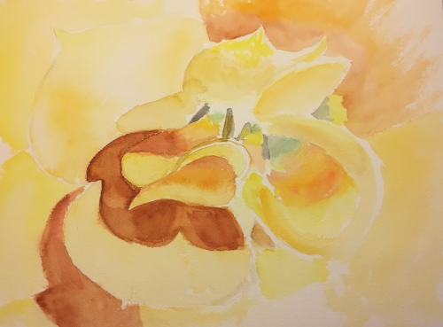 Watercolor: Underpainting of Yellow Succulent Flower