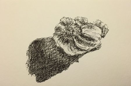 Pen and Ink: Shading Study - Garlic