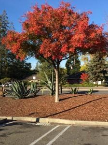 Photograph: Representational Tree Outside Peet's Coffee
